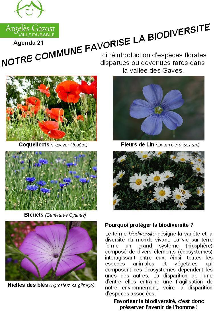 Information sur les fleurs uomo innamorato comportamenti for Conseil sur les plantes
